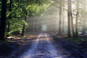 Blog nature et environnement